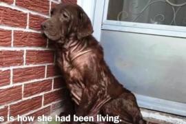 Бездомная собака впервые принимает ванну. Видео