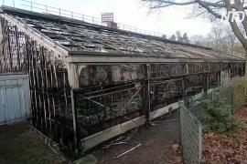 Пожар в немецком зоопарке: погибли более 30 животных