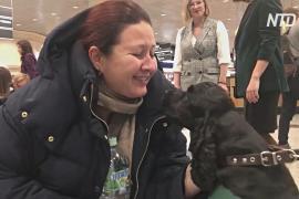 Собаки-терапевты подняли настроение авиапассажирам в Домодедово