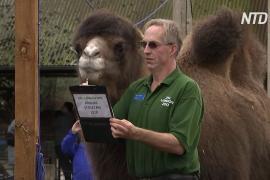 Учесть каждого: в Лондонском зоопарке начался ежегодный подсчёт животных