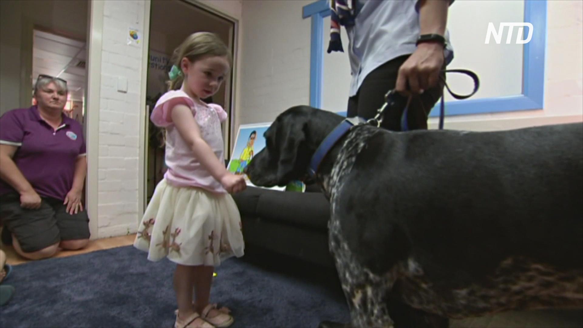 Австралийских детей учат безопасно общаться с собаками