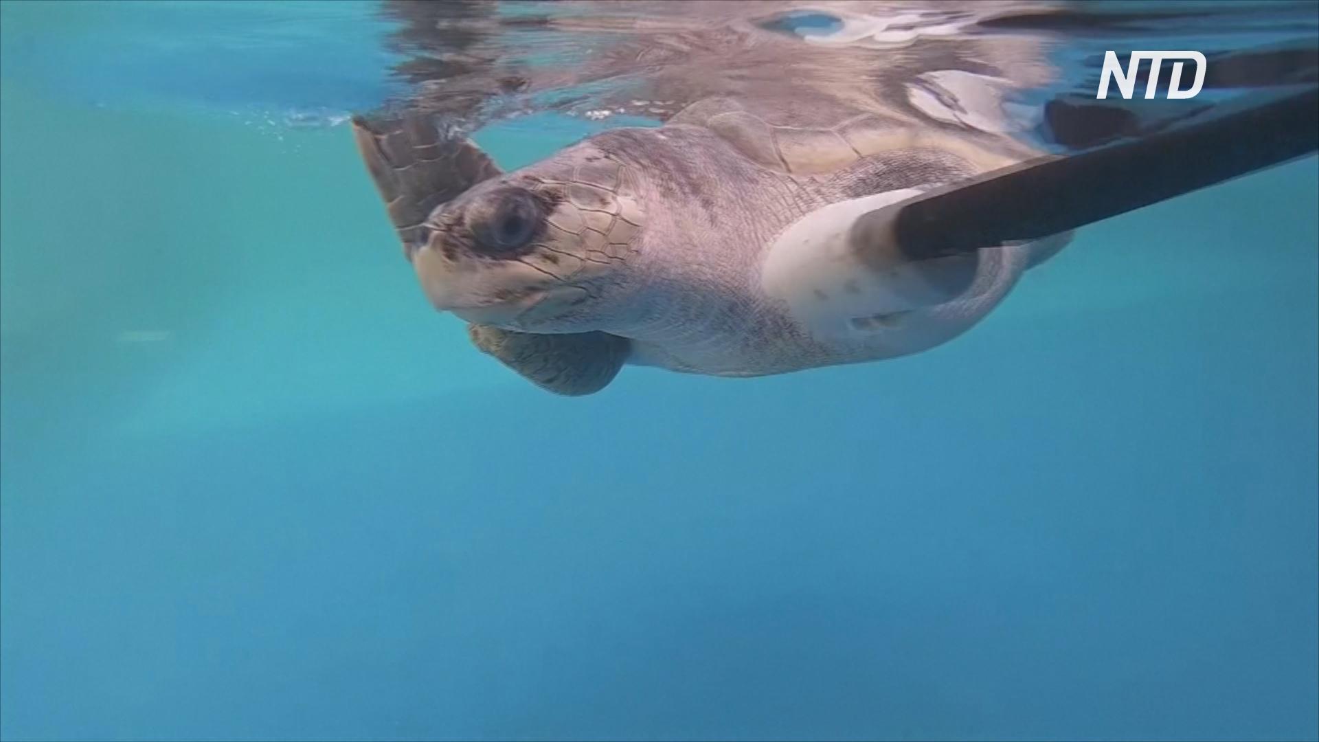 В Таиланде впервые создали искусственный ласт для черепахи