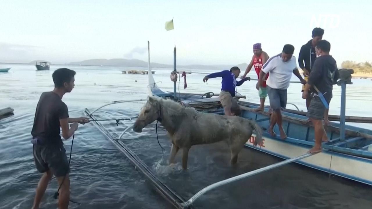 Извержение вулкана на Филиппинах: жители вернулись, чтобы спасти лошадей