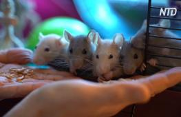Символ года и муза: крысы вдохновили писательницу на новую книгу