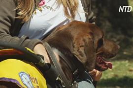 В Аргентине по два года обучают собак-поводырей и их владельцев