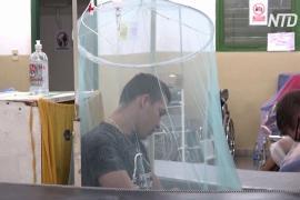 Режим ЧС в Парагвае: лихорадкой денге заразились 1700 человек