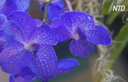 В «Аптекарском огороде» Москвы цветут тысячи экзотических орхидей