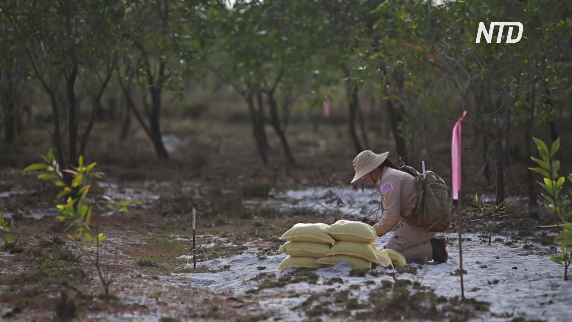 Вьетнамские поля снова возделывают после очистки их от мин
