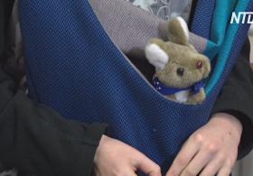 Польки шьют сумки для кенгурят, осиротевших после пожаров в Австралии