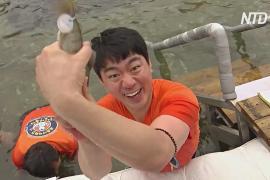 Как на фестивале в Южной Корее рыбу ловили голыми руками