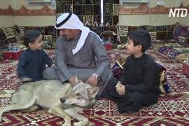 В саудовской семье более десяти лет живут волки
