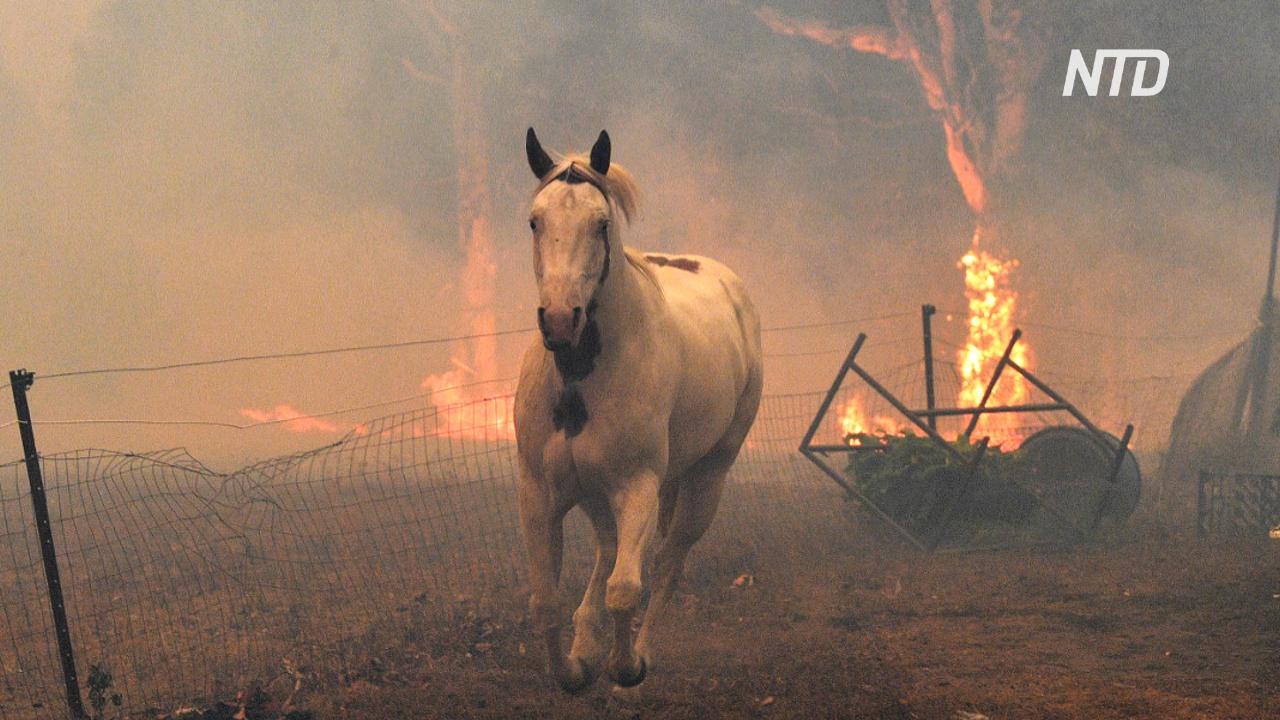 В пожарах в Австралии могло погибнуть до 500 миллионов животных