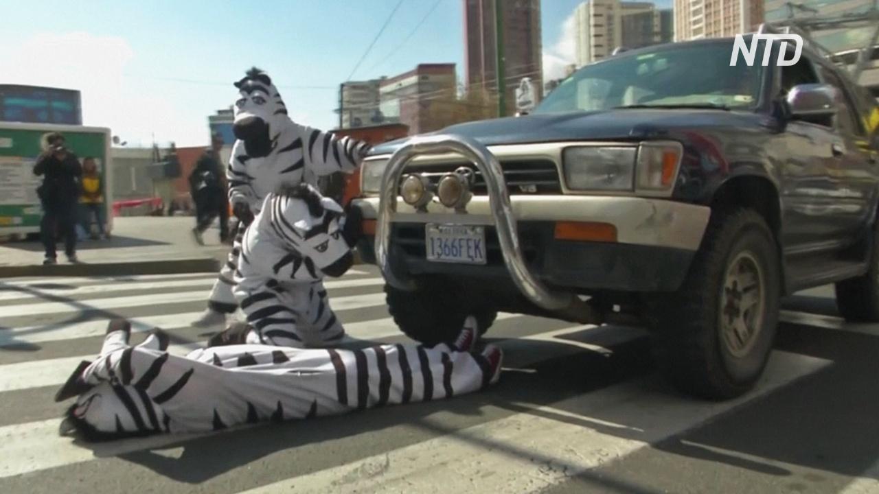 В Боливии на пешеходных переходах работают «зебры»