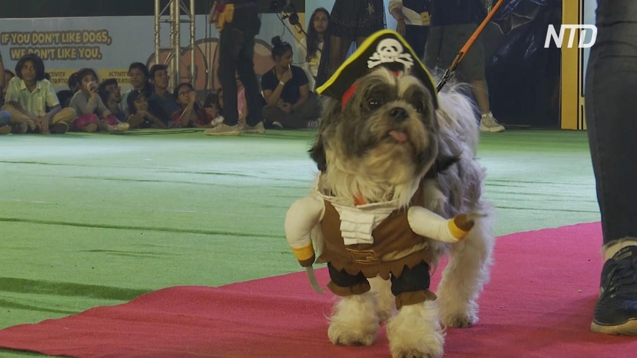 В Мумбаи на модный подиум вышли собаки и кошки