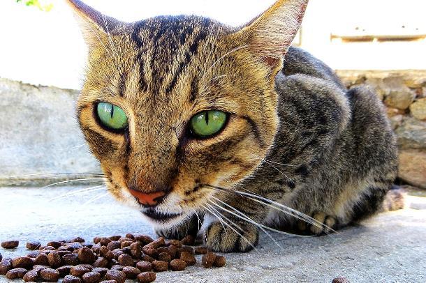 Топ-5 сухих кормов для кошек
