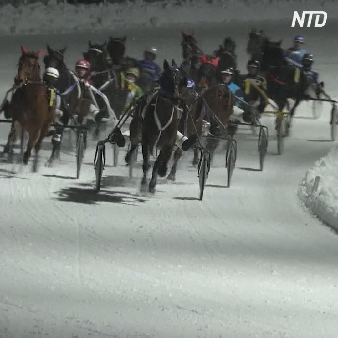 Как прошли первые в финской Лапландии лошадиные бега по снегу