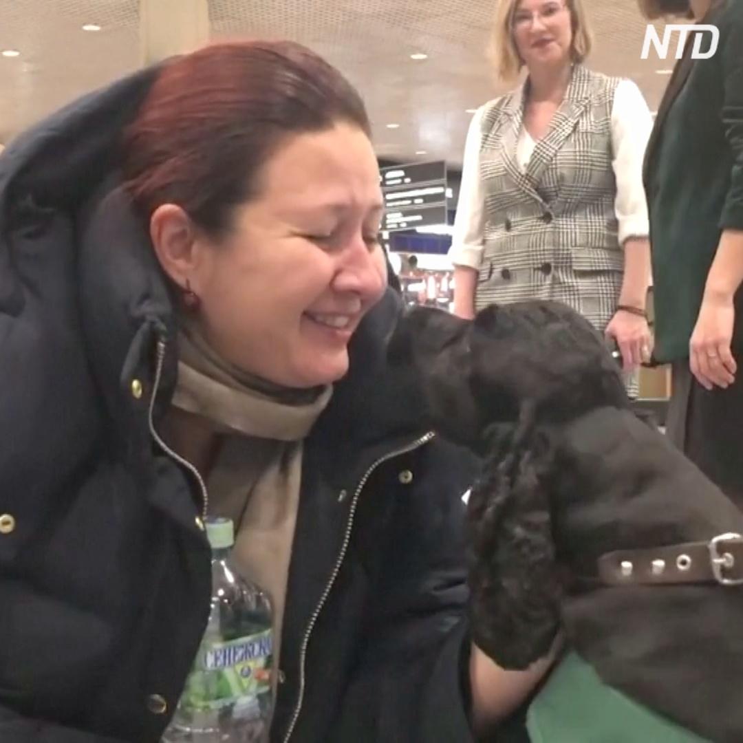 Собаки-терапевты поднимают настроение пассажирам в Домодедово