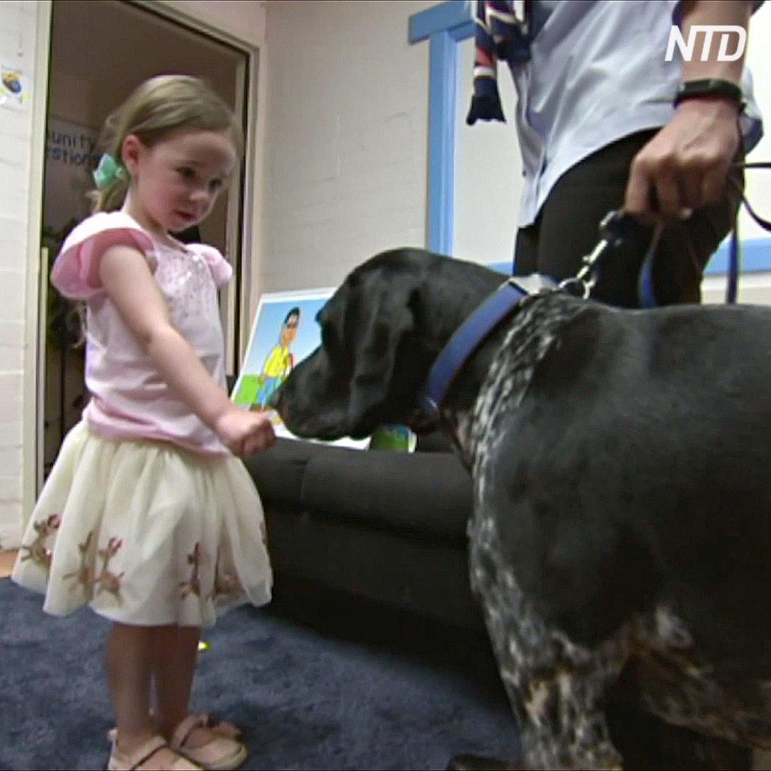 Дошкольников Австралии учат, как не быть укушенными собаками
