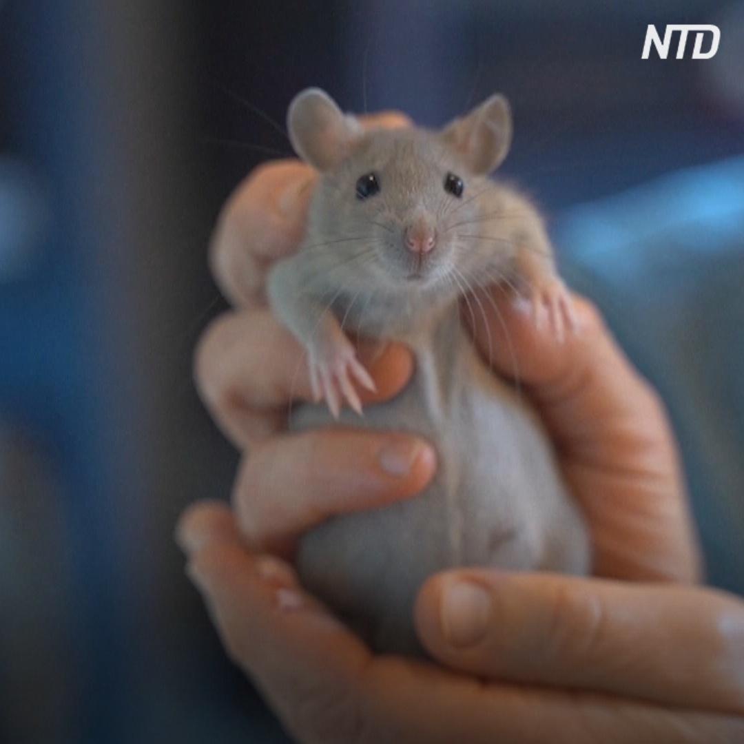 Крысы вдохновили известную писательницу на новую книгу