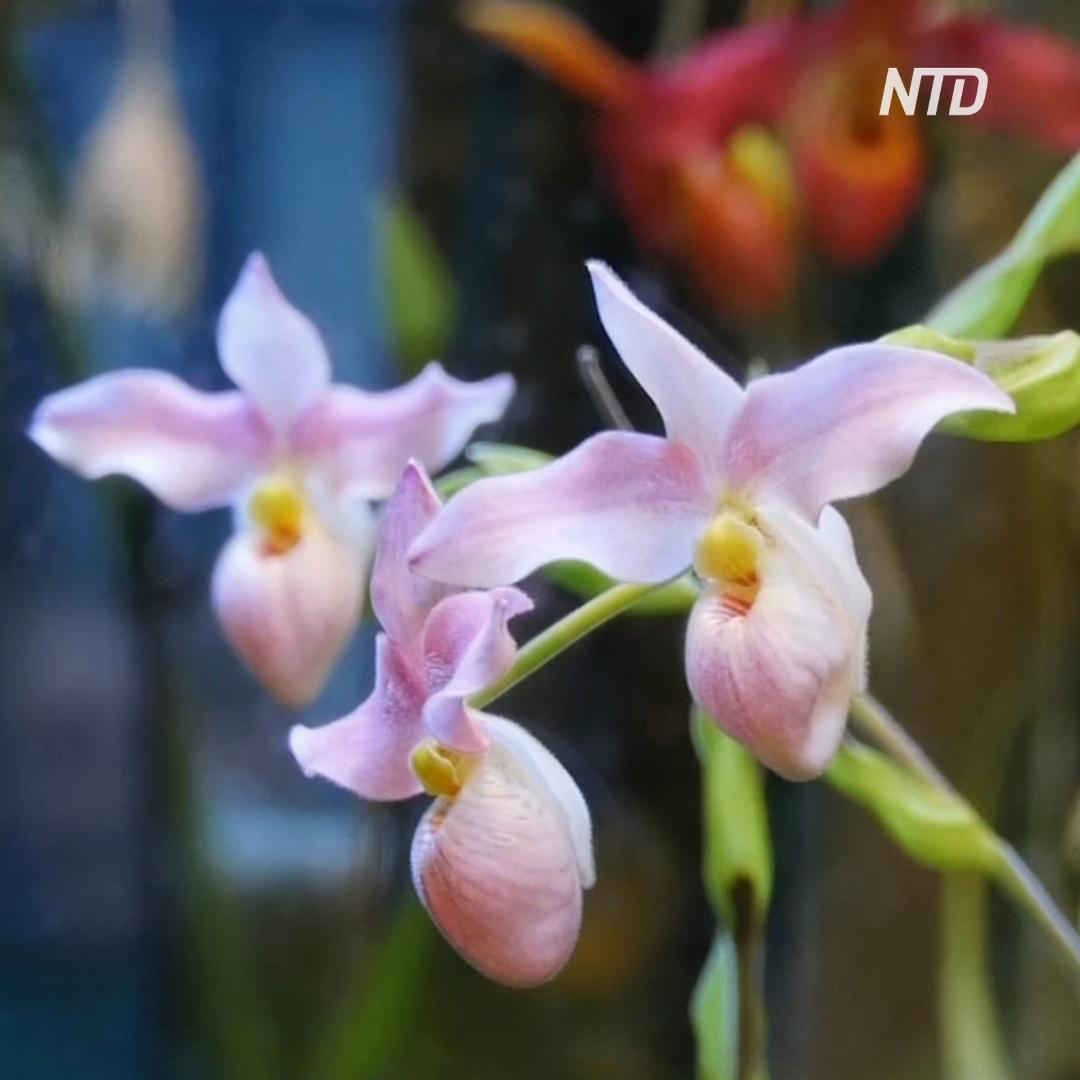 Тысячи орхидей расцвели в «Аптекарском огороде»