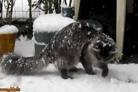 Как кошки реагируют на снег. Забавное видео