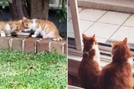 История двух котят, у которых один глаз на двоих