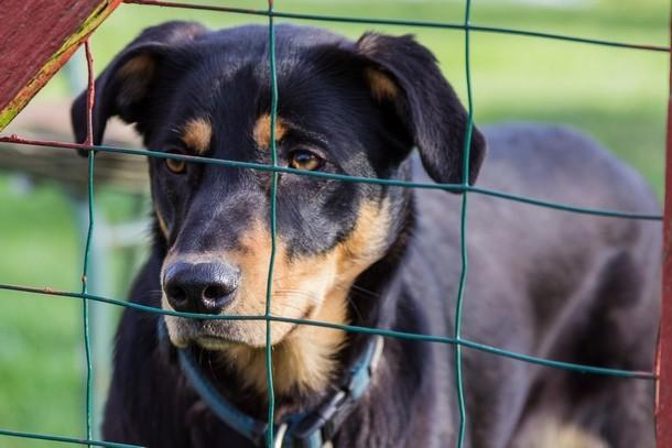 В Бельцах по инициативе Ренато Усатого откроется приют для бездомных животных