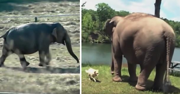 Про дружбу слона и собаки: 10 лет вместе