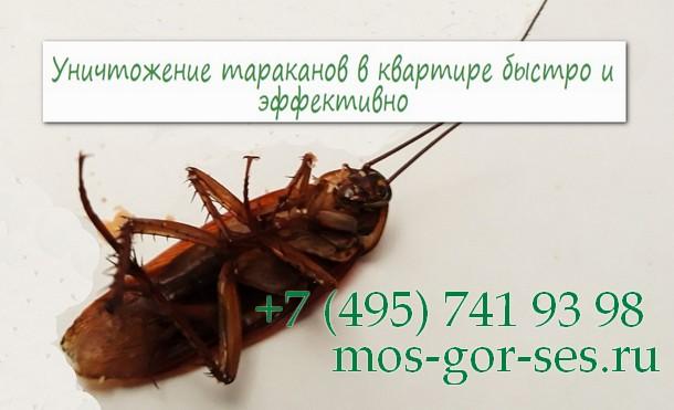 Эффективно и быстро избавиться от тараканов