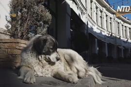 Собачья жизнь: как в Грузии заботятся о бездомных дворнягах