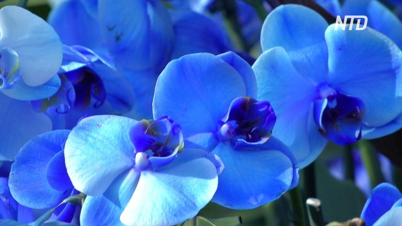 Тысячи орхидей и растения Индонезии украсили Сады Кью в Лондоне