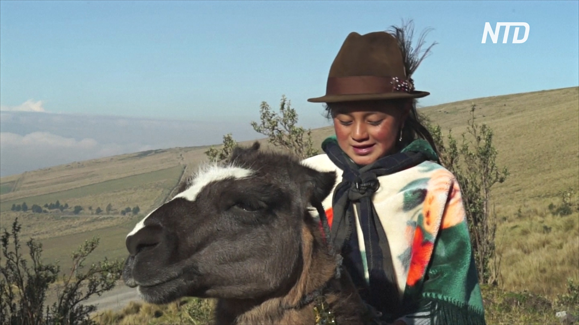 Дети-жокеи поучаствовали в скачках на ламах в эквадорских Андах