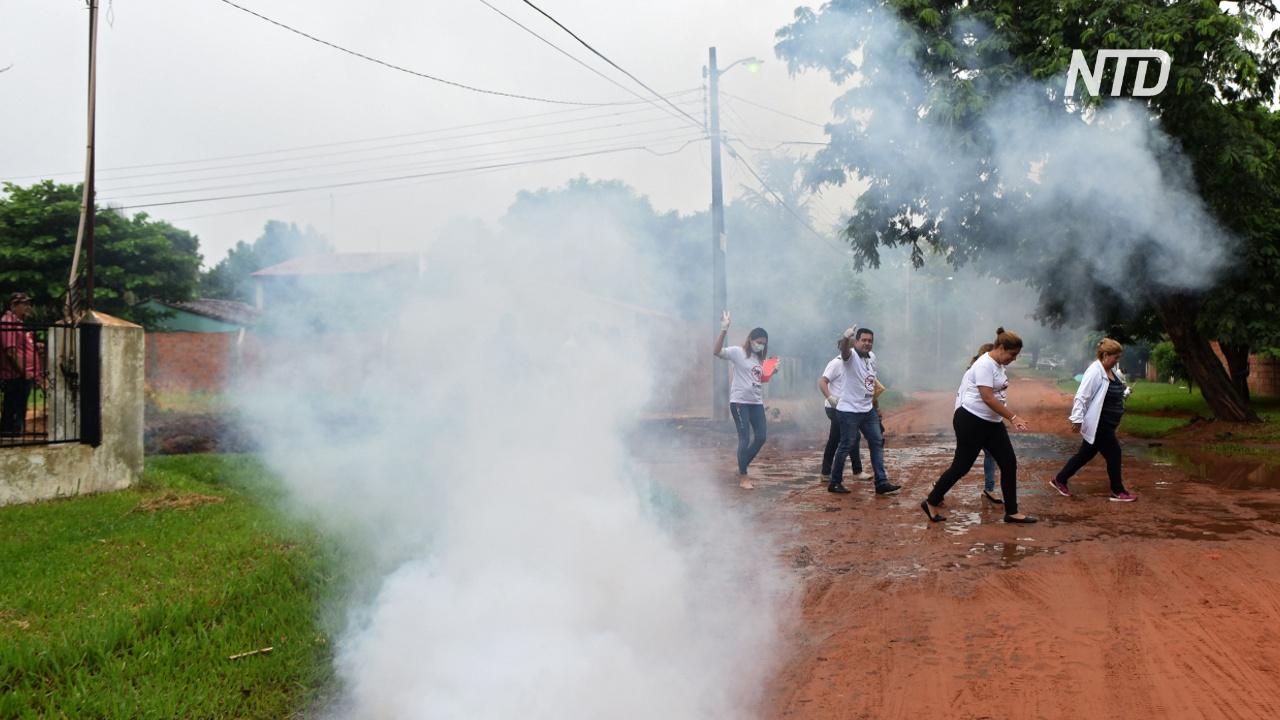 В Парагвае из-за лихорадки денге обрабатывают инсектицидами школы