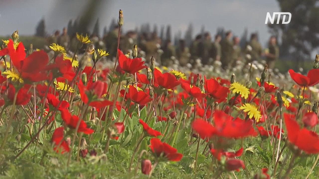 В пустыне Негев зацвели ярко-красные анемоны