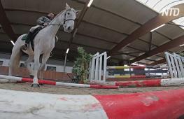 Перед карнавалом в Кёльне лошадей проверяют на стрессоустойчивость