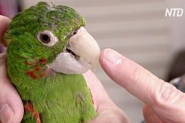 Бразильский ветеринар делает индивидуальные протезы для животных
