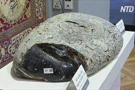 В Дании на аукционе продали огромный копал весом 38,5 кг