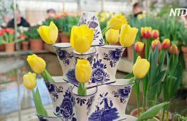 От степей Азии до лихорадки в Голландии: история тюльпанов на выставке в Москве