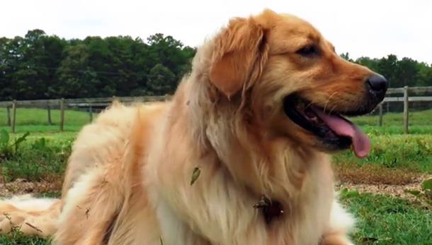 4 6 - Собака поддержала испуганную мини-лошадь. Трогательное видео