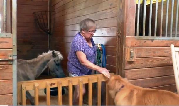 5 4 - Собака поддержала испуганную мини-лошадь. Трогательное видео