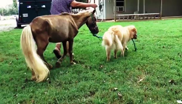 6 1 - Собака поддержала испуганную мини-лошадь. Трогательное видео
