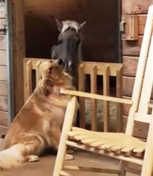 7 1 - Собака поддержала испуганную мини-лошадь. Трогательное видео