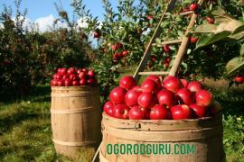 Хороший советчик для садоводов и огородников