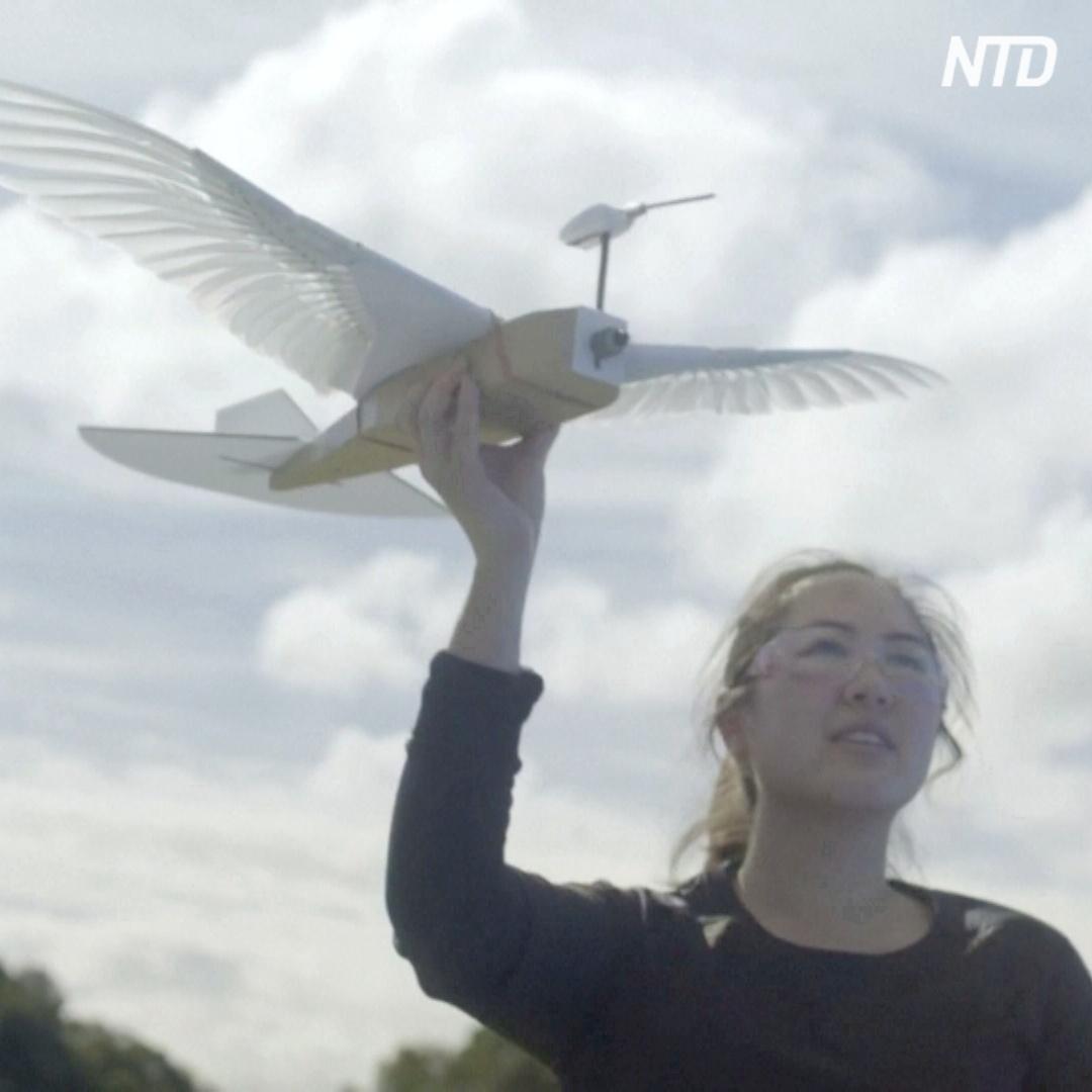 Летающий робот-голубь поможет создать дроны нового поколения
