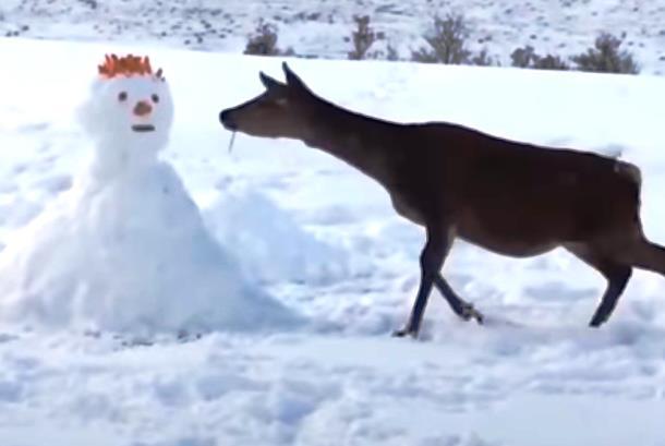 Что сделал олень со снеговиком, попавшимся ему на пути