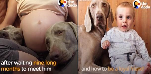 Новорождённый и собаки стали неразлучными. Трогательные фото