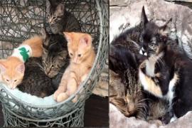 Как бездомный котёнок заботится о дедушке-коте