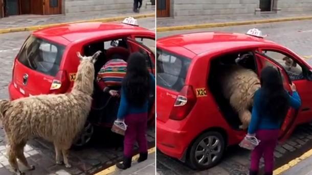 Что удивило туриста на одной из улиц Перу