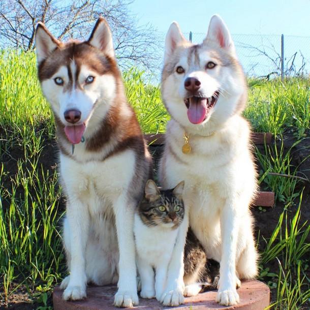 13 1 - Как ведёт себя кошка, которую воспитали собаки