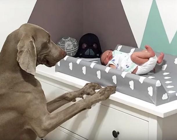 2 1 - Новорождённый и собаки стали неразлучными. Трогательные фото